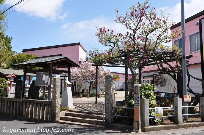 静御前墓所の静桜