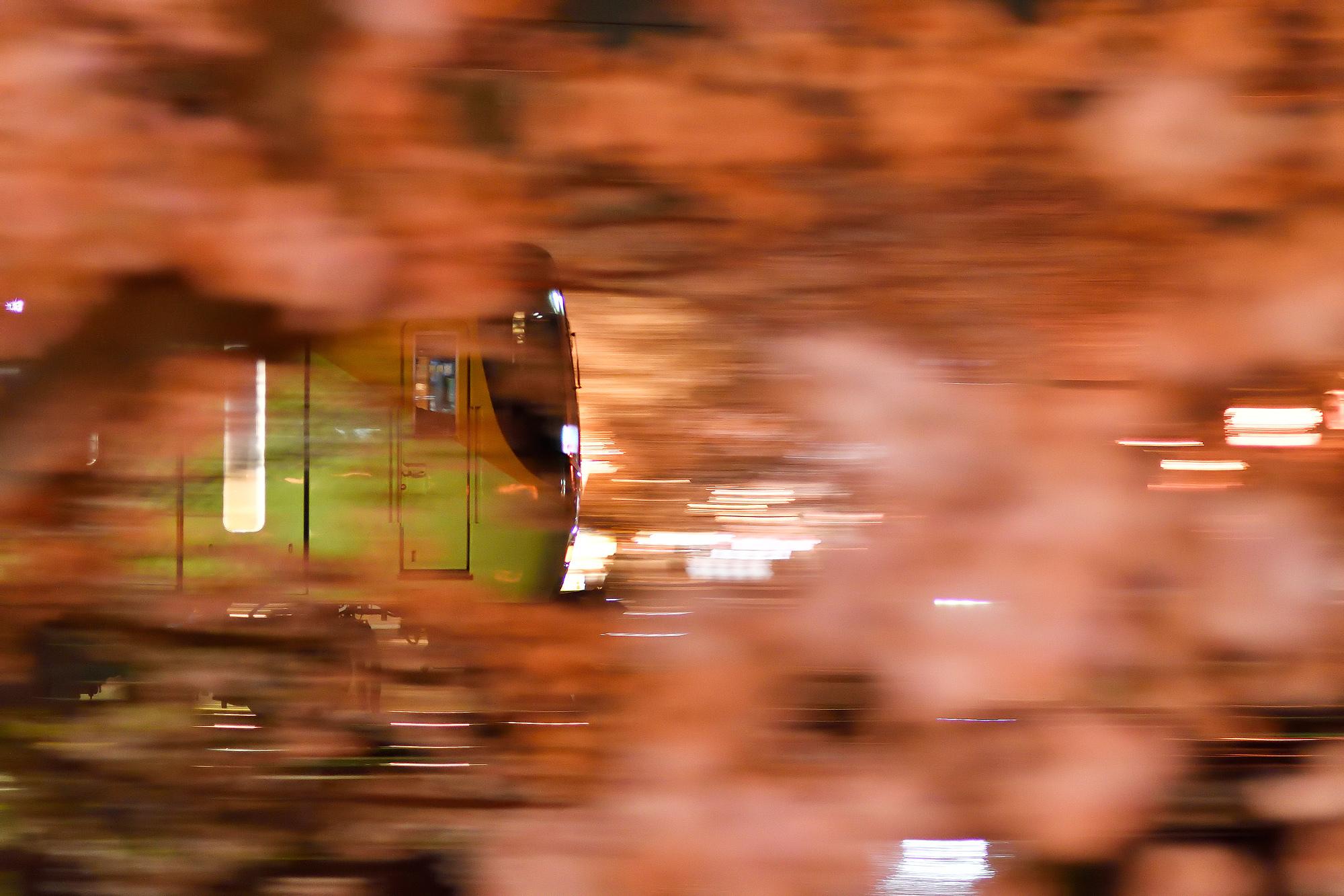 夜桜鉄道2018(2)
