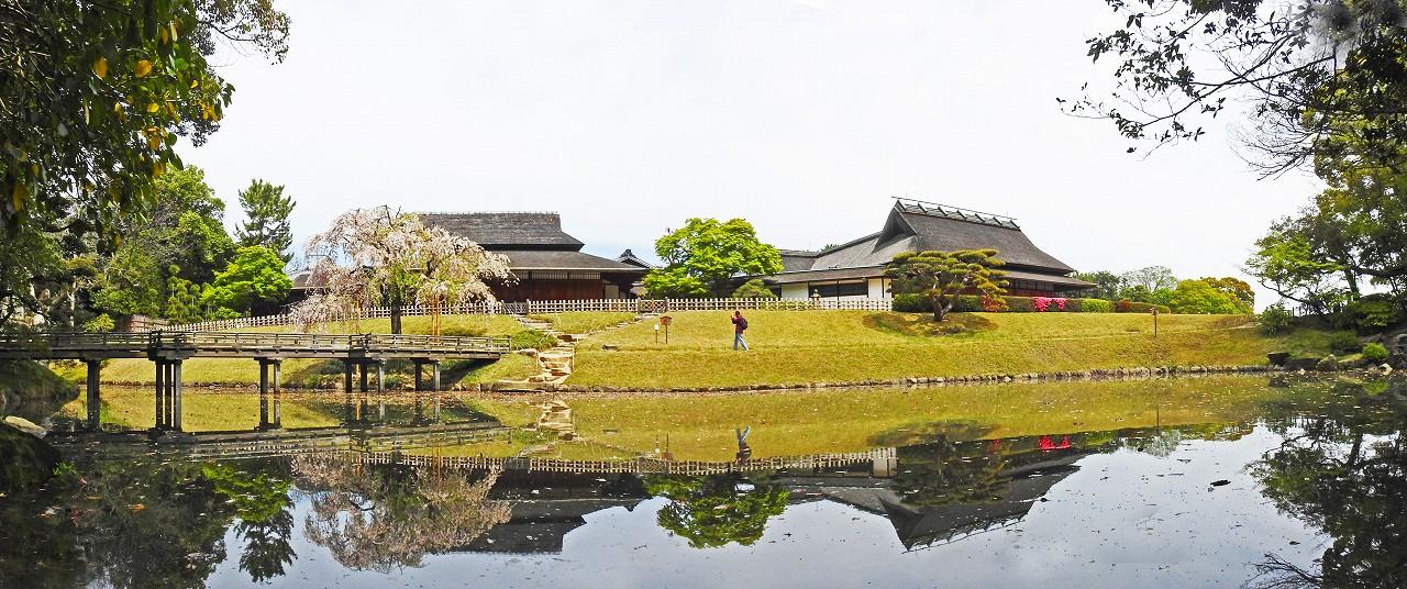 20180412 後楽園今日の花葉の池の枝垂れ桜の様子ワイド風景 (1)