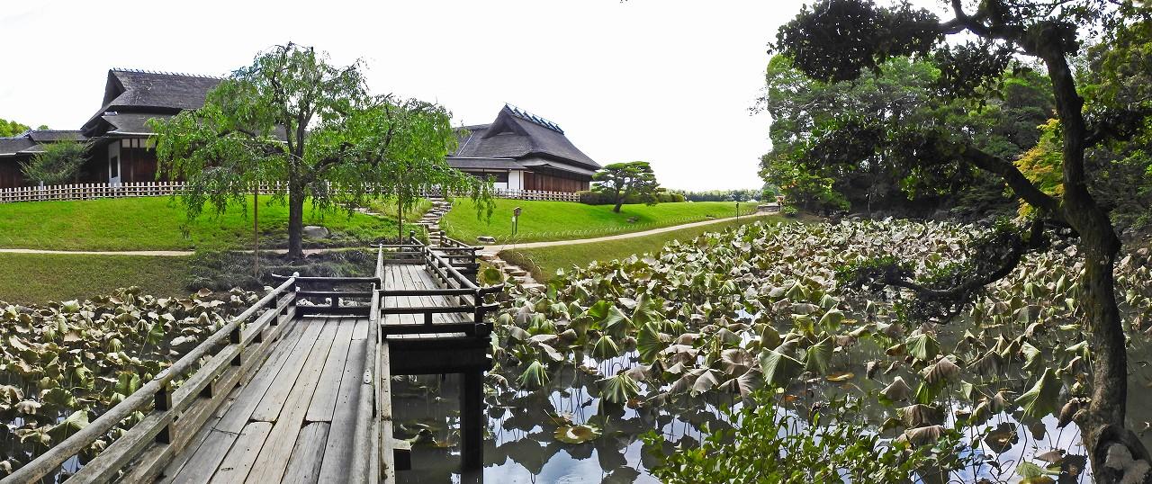 20180710 後楽園今日の岡山豪雨の爪痕の園内花葉の池のワイド風景 (1)