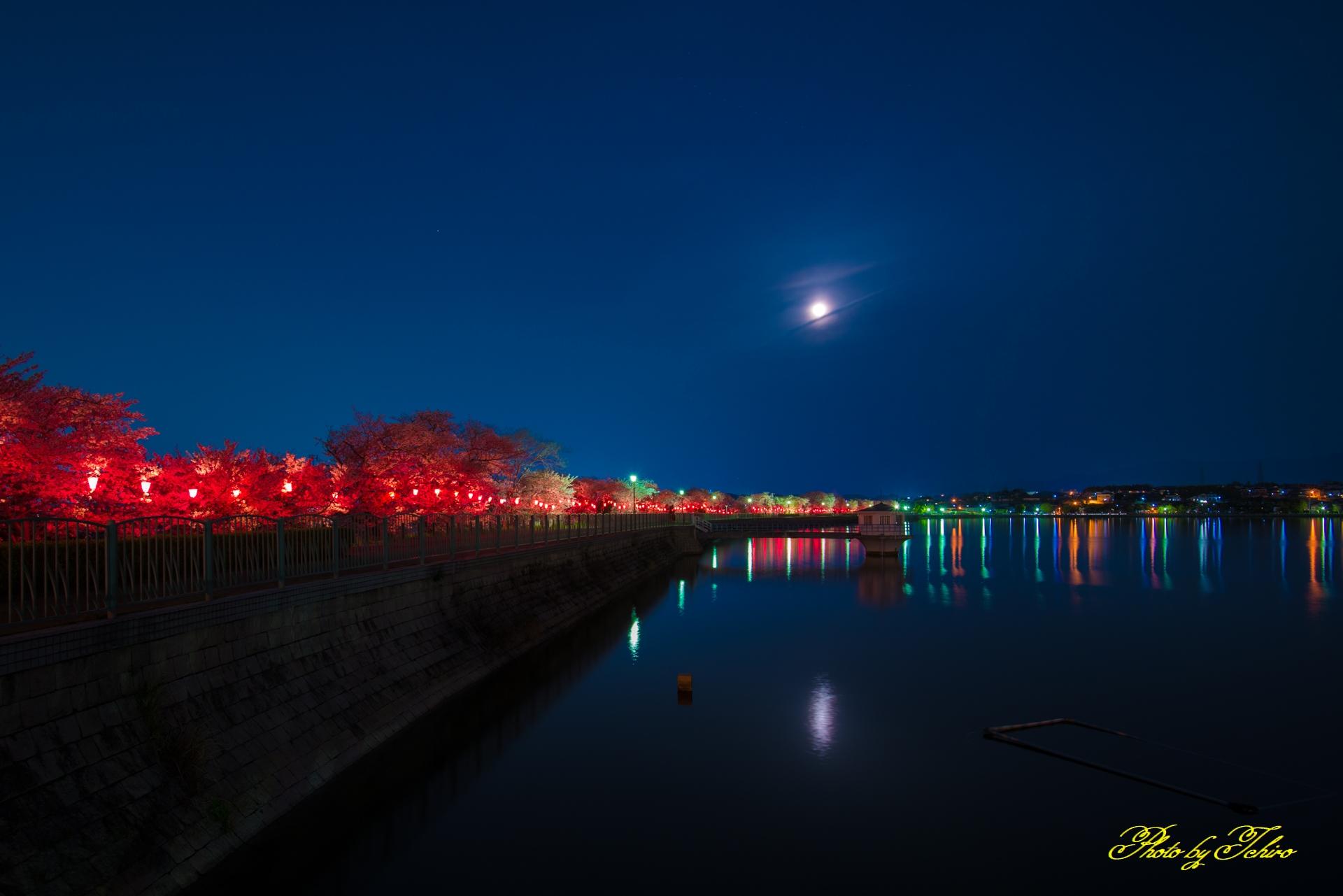 夜の久米田池
