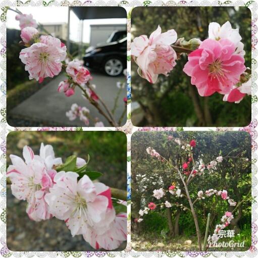 PhotoGrid_1523965114856.jpg