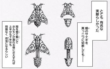 テラフォーマーズ45話ネタバレ感想(5)