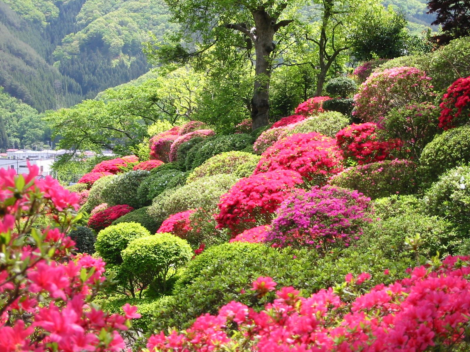 釜石植物園