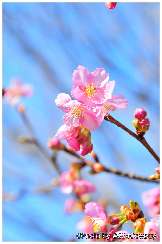 早き春の訪れ 其の1 写真