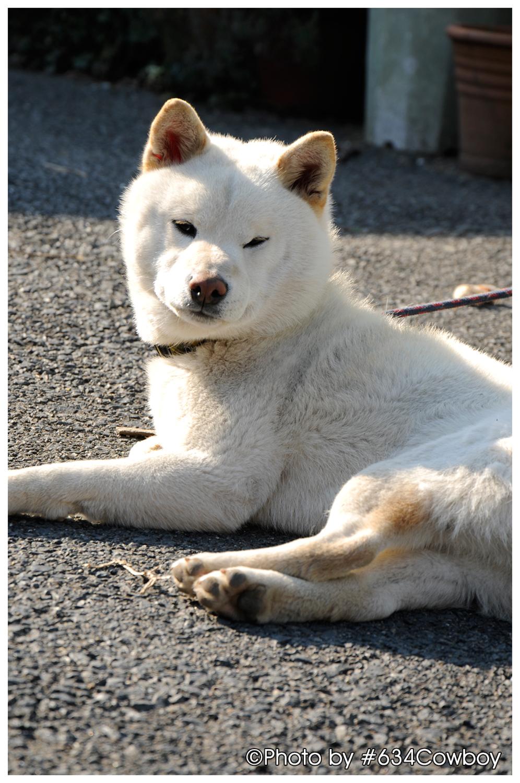 大洗で見かけた犬 「桃助」 その1 写真