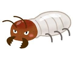 bug_shiroari0510.jpg