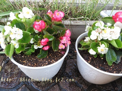 flower0519.jpg