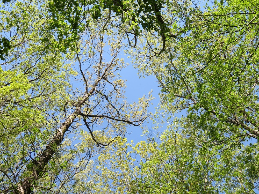 12樹幹の上IMG_4262