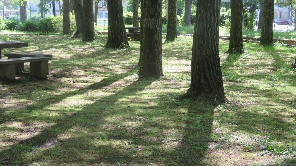 2木漏れ日の公園IMG_4364