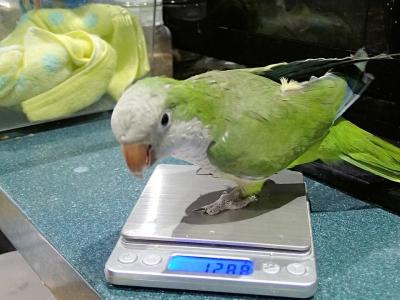 きなこの体重測定