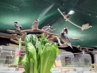 小松菜まつり