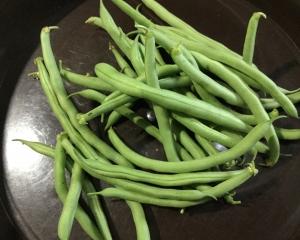 インゲン豆初収穫