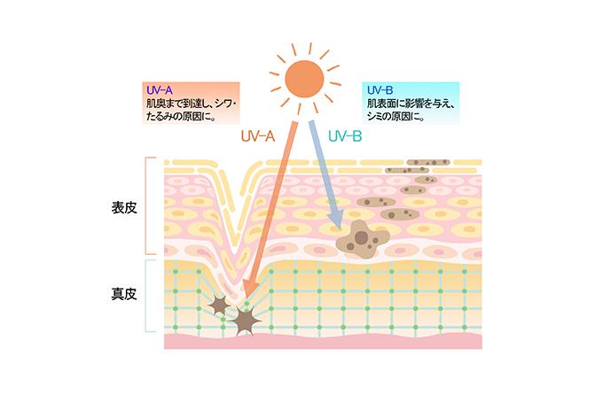 UV-A UV-B