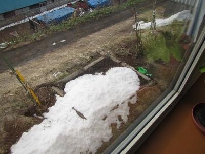 日曜日の雪