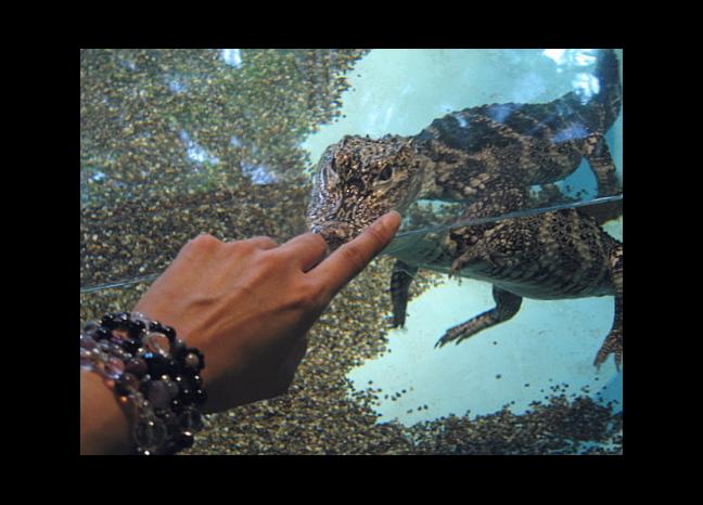 alligatorjana_1.jpg