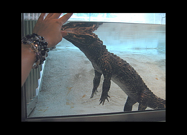 alligatorjana_2.jpg