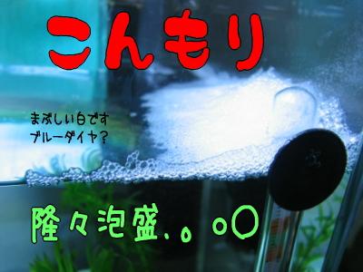 kipp_1.jpg