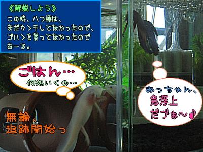 yachu_1.jpg