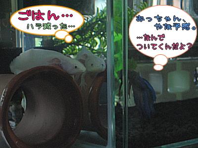 yachu_2.jpg