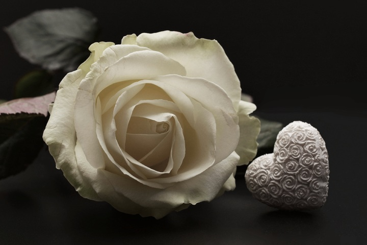 blossom-plant-white-flower-petal-bloom-660493-pxhere-com.jpg