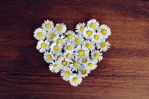 daisy_heart_daisy_heart_love_heart_shaped_romantic_spring_symbol-621176.jpg