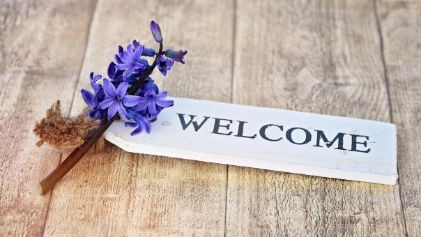 hyacinth_flower_plant_flowers_blue_fragrant_flower_fragrant_wood-723563.jpg