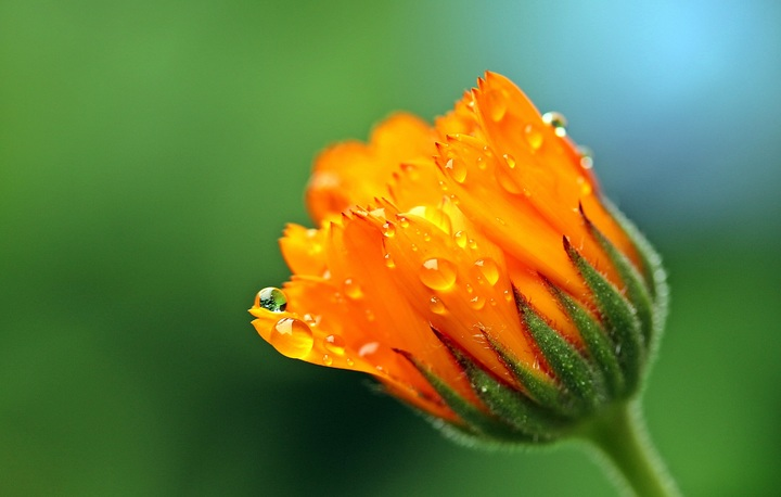 nature-blossom-dew-plant-photography-leaf-555131-pxhere-com.jpg