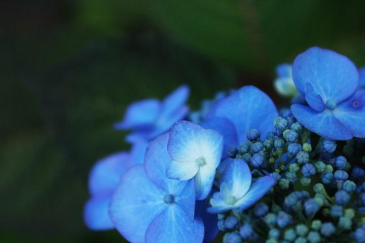 nature-blossom-plant-flower-petal-bloom-496492-pxhere-com.jpg