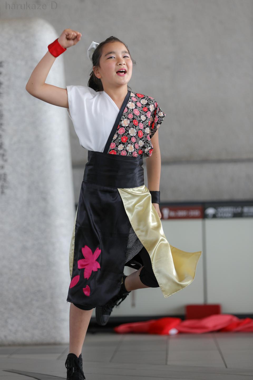 yumezakura20180429rgm-42.jpg