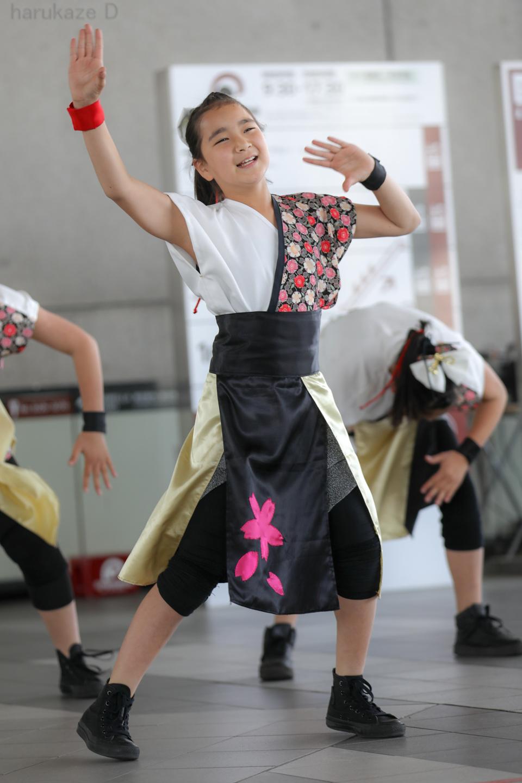 yumezakura20180429rgm-8.jpg