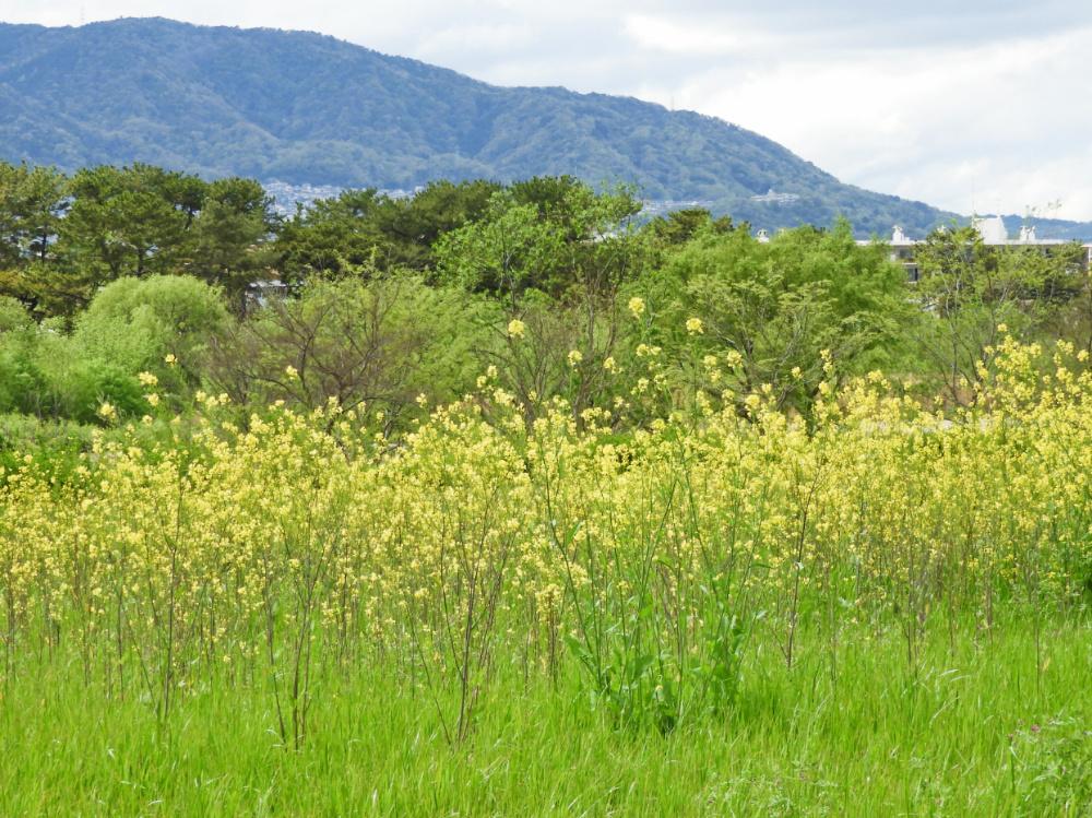 武庫川DSCN8220