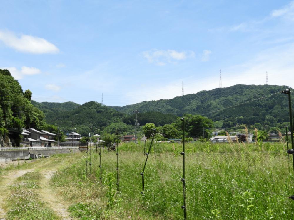大ケヤキDSCN9087