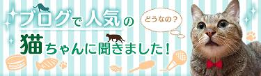 【ブログで人気の猫ちゃんに聞きました!】