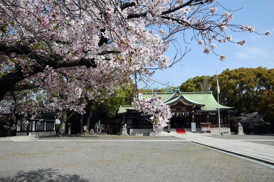 大阪護国・桜 (0)