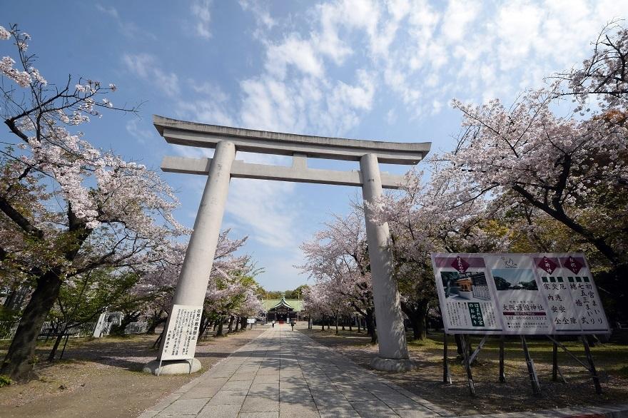 大阪護国・桜 (1)