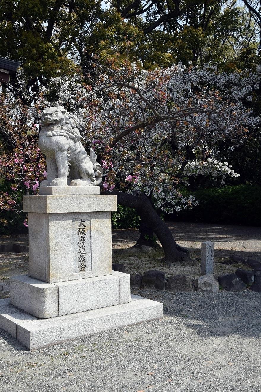 大阪護国・桜 (6)
