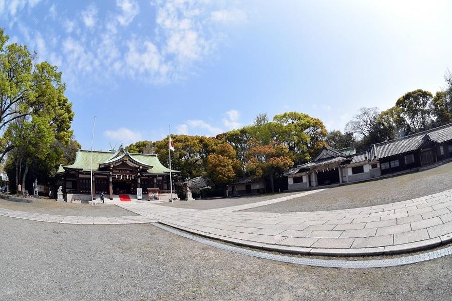 大阪護国・桜 (7)