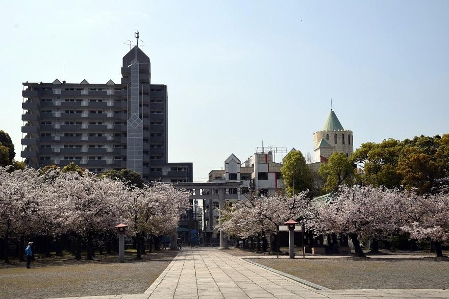 大阪護国・桜 (8)