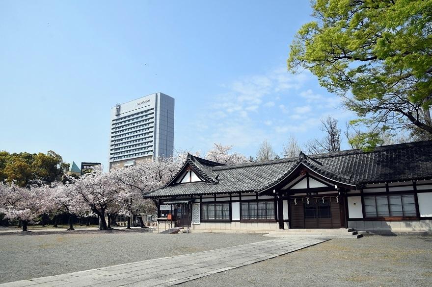 大阪護国・桜 (11)