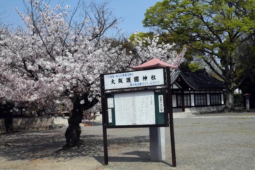 大阪護国・桜 (25)