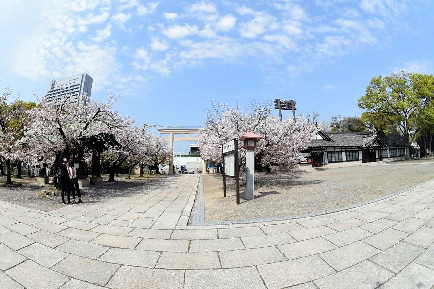 大阪護国・桜 (26)