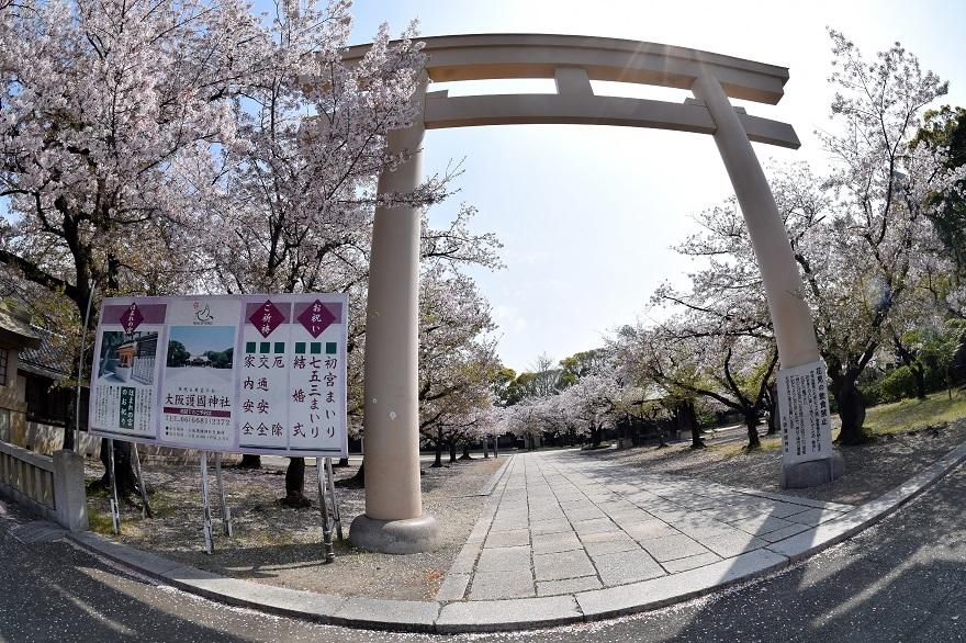 大阪護国・桜 (27)