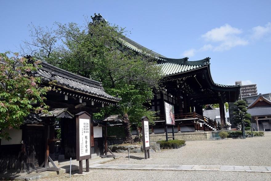 大念仏寺・桜#2 (5)