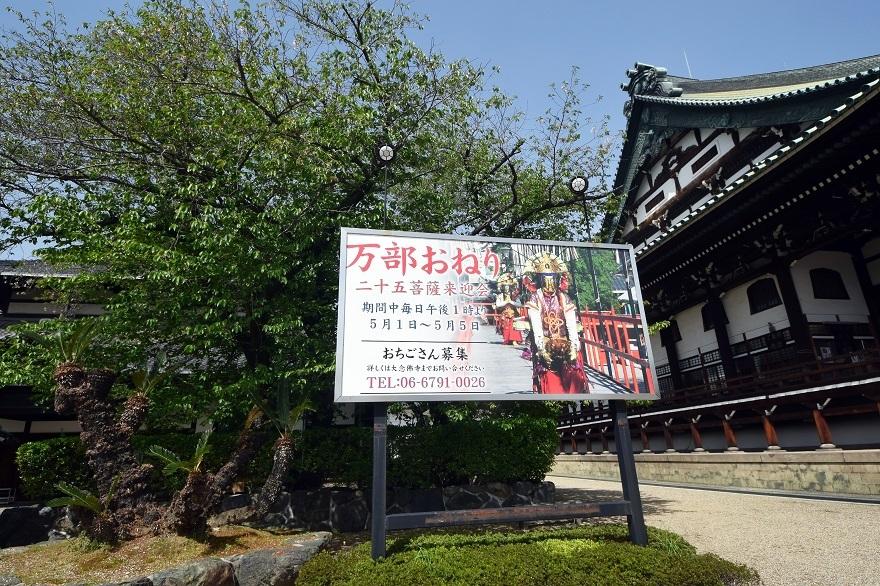 大念仏寺・桜#2 (11)