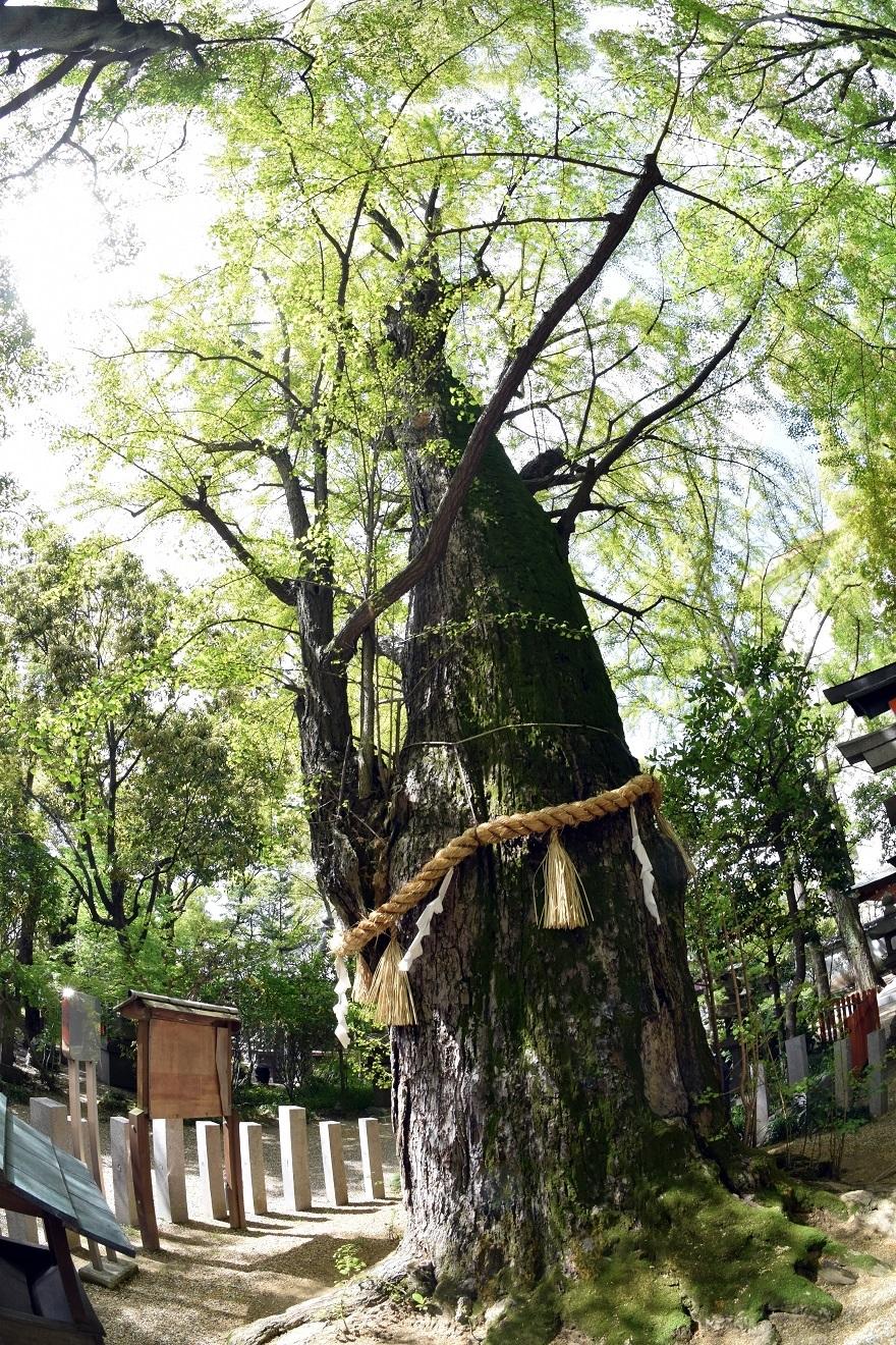 杭全神社・春 (8)