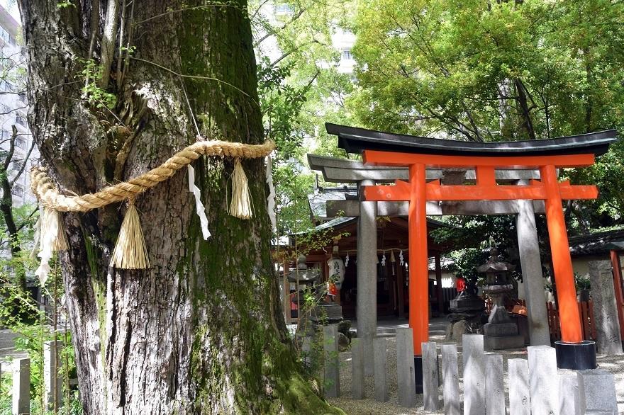 杭全神社・春 (9)