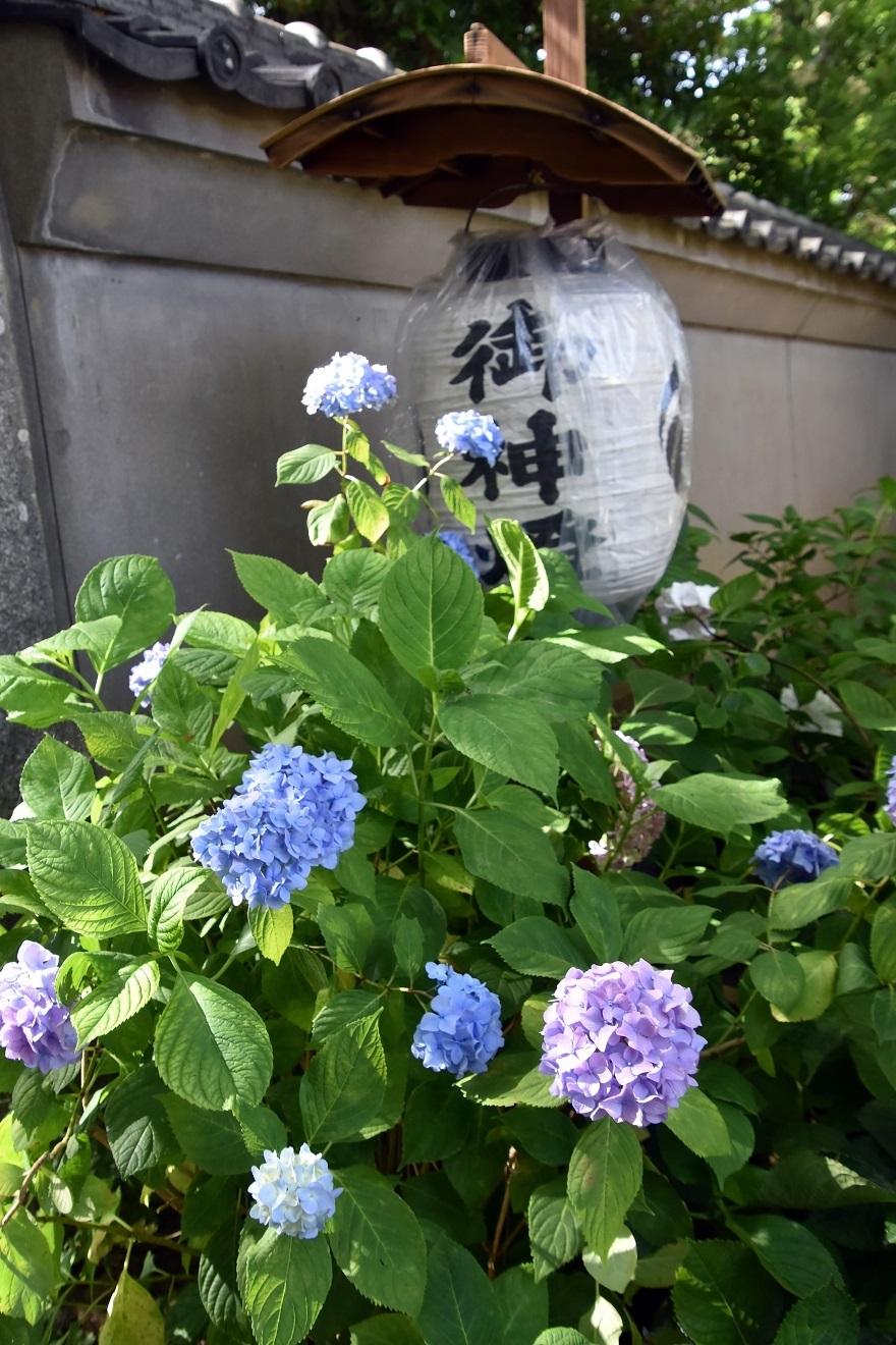 住吉・ダイ (058)