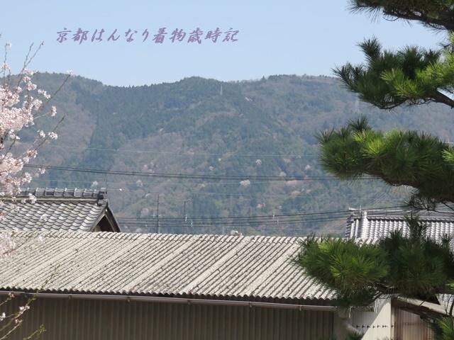 IMG_8118.jpg