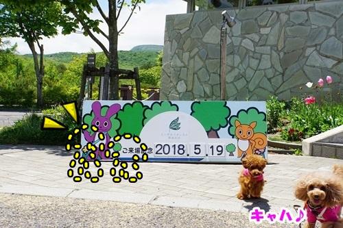 6_20180620133626d41.jpg